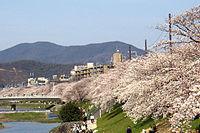 Kyoto is safe.